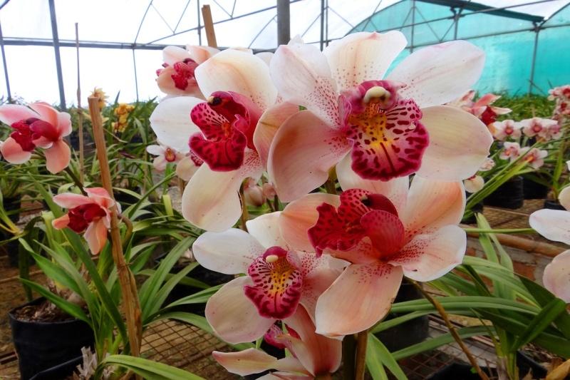 Aromas de orquídeas en perfumes unisex